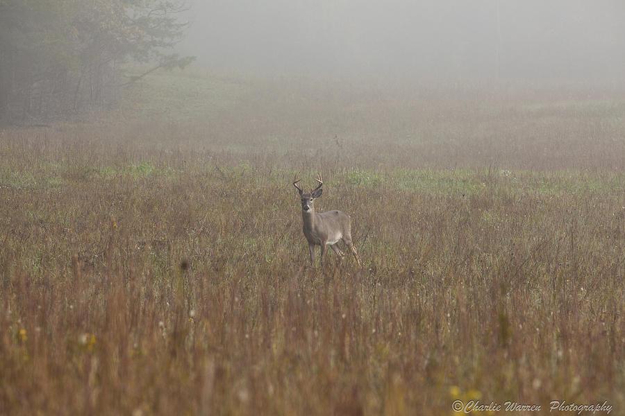 Deer Photograph - Young Buck by Charles Warren