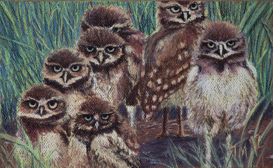 Owls Pastel - Young Burrowers by Thomas Maynard