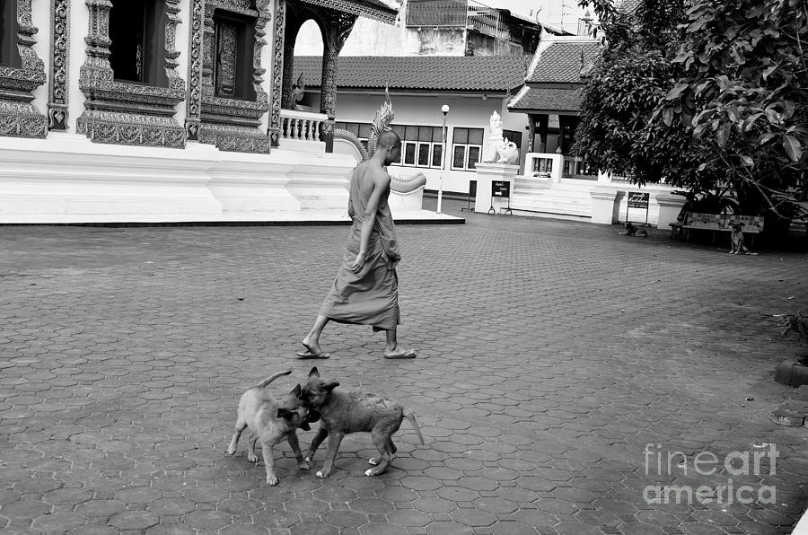 Buddha Photograph - Young Dogs by Dean Harte