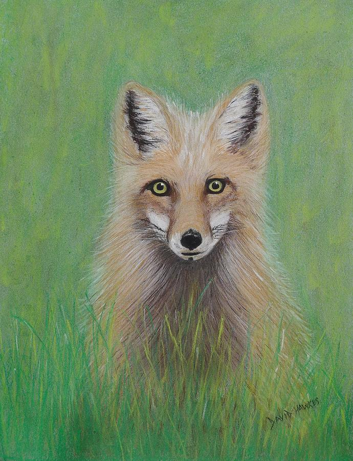Fox Painting - Young Fox by David Hawkes