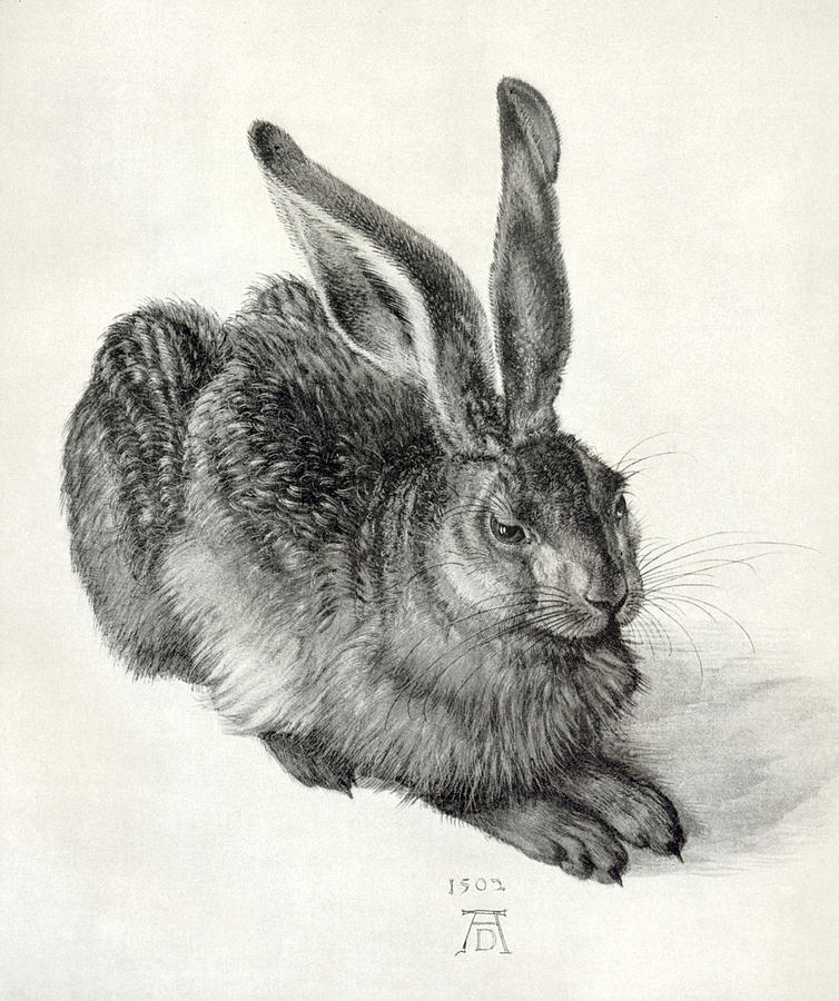 Durer Photograph - Young Hare, By Durer by Sheila Terry
