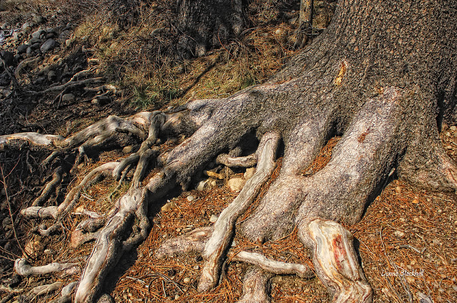 Tree Photograph - Your Roots Are Showing by Donna Blackhall