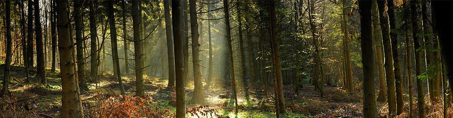 Forest Photograph - Youre Sure Of A Big Surprise by John Chivers