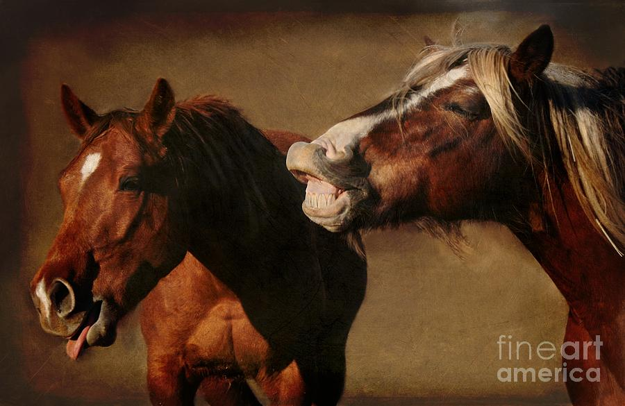 Horse Photograph - Youre Too Funny by Davandra Cribbie