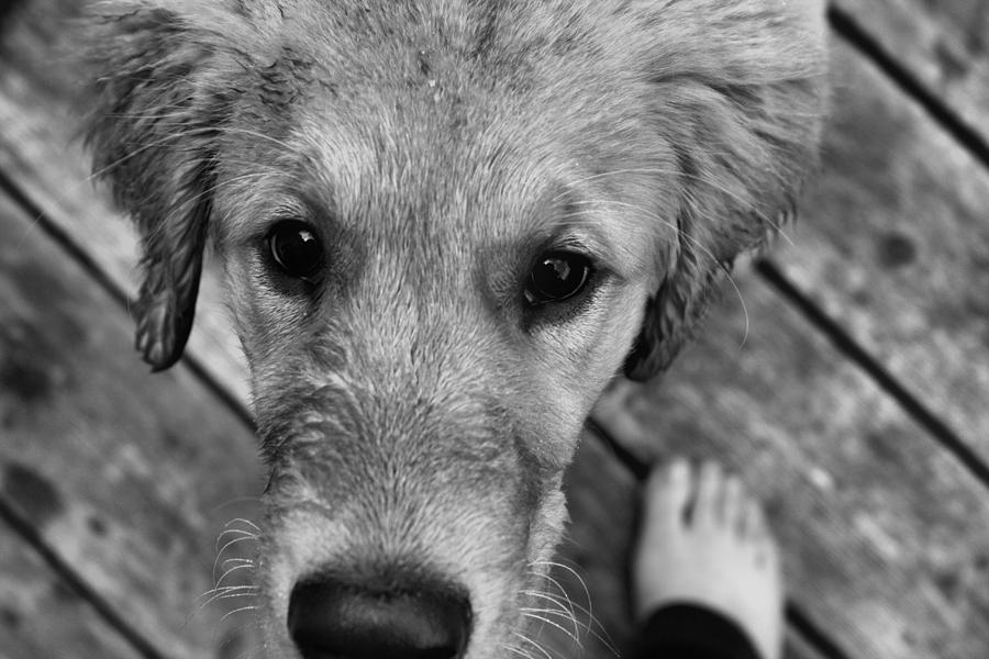 Puppy Photograph - Yours by Tami Rounsaville