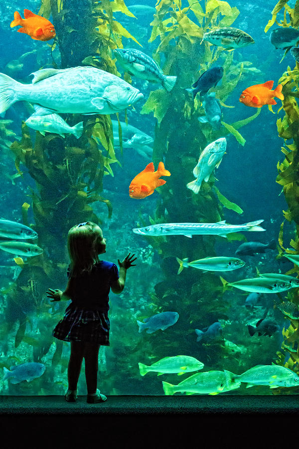 Aquarium Photograph - Youthful Expectations  by Donna Pagakis