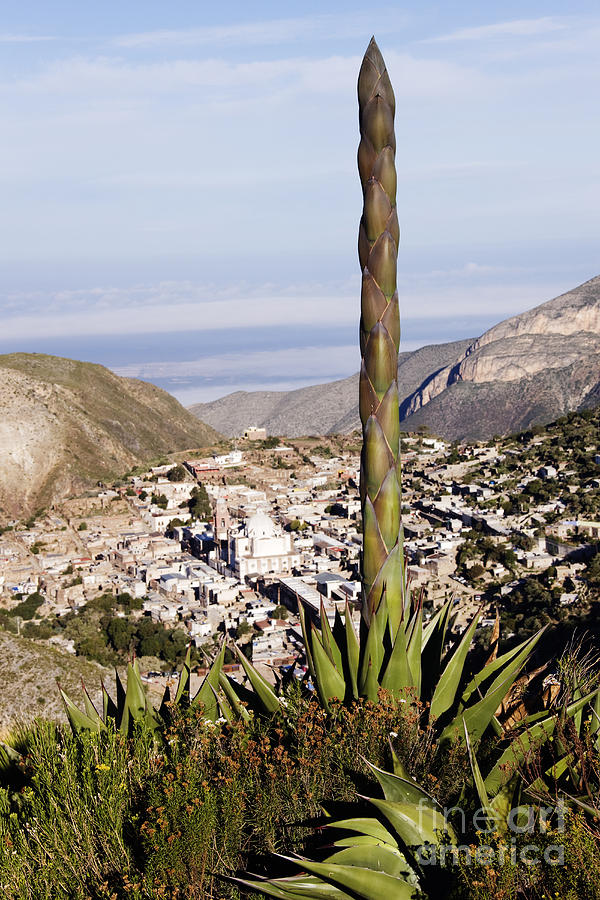 Alpine Photograph - Yucca Tree And Town by Jeremy Woodhouse