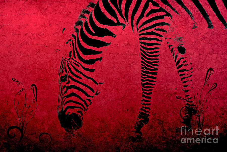 Zebra Photograph - Zebra On Red by Aimelle