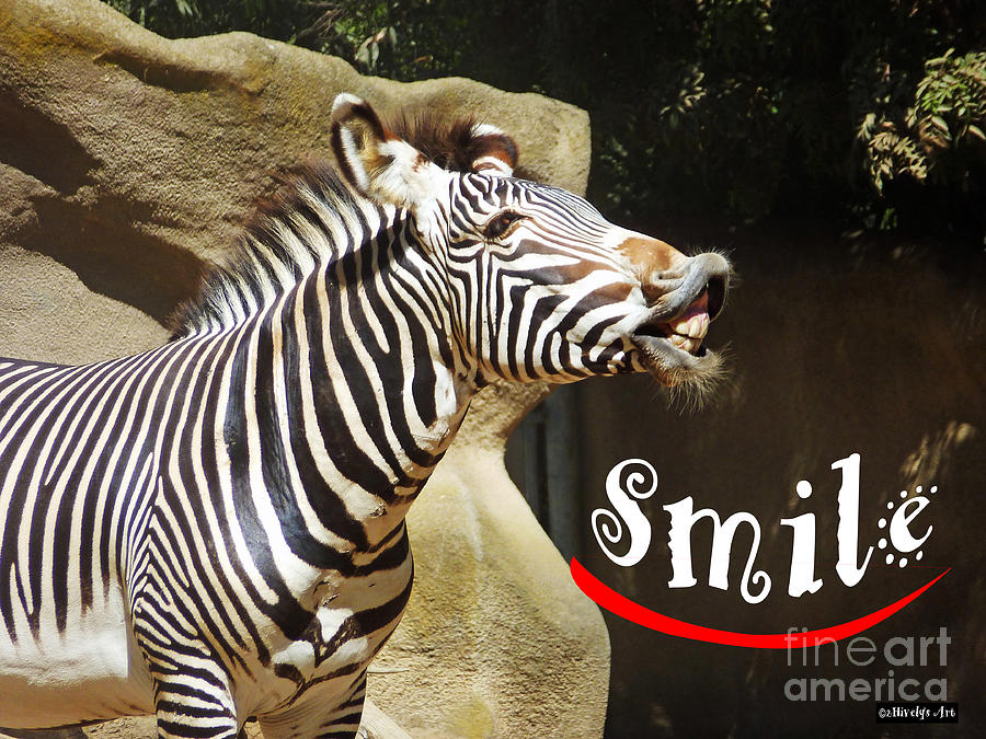 Zebra Photograph - Zebra Smile by Methune Hively