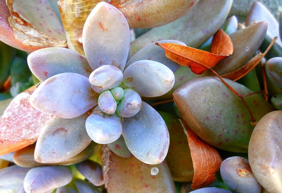 Plant Photograph - Zen Garden by Sandrine Pelissier