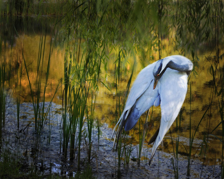 Crane Photograph - Zen Pond by Melinda Hughes-Berland