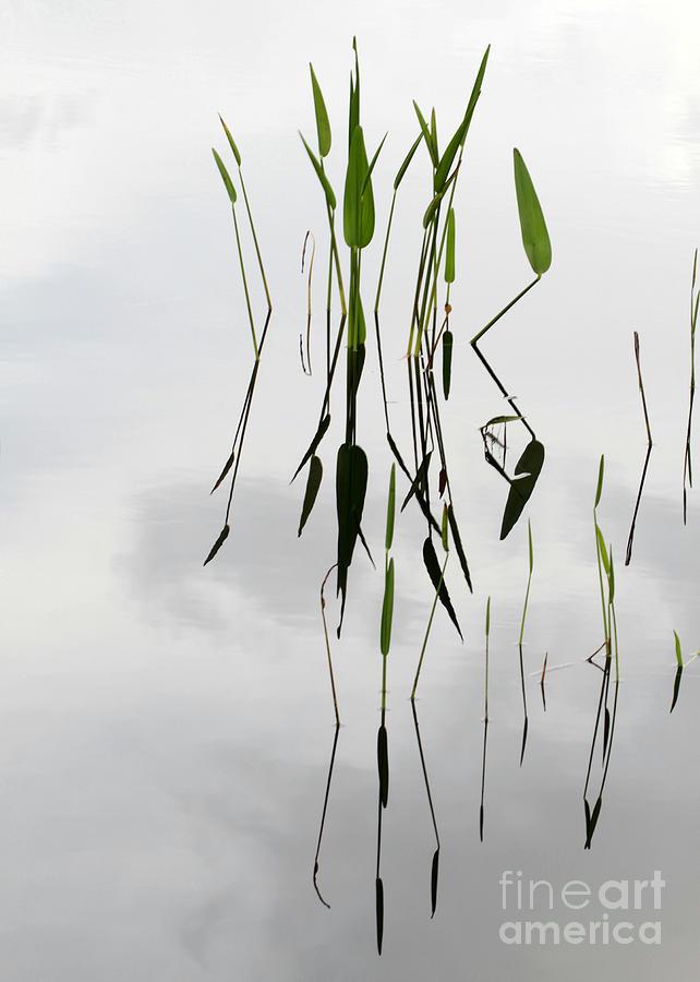 Zen Photograph - Zen by Sabrina L Ryan
