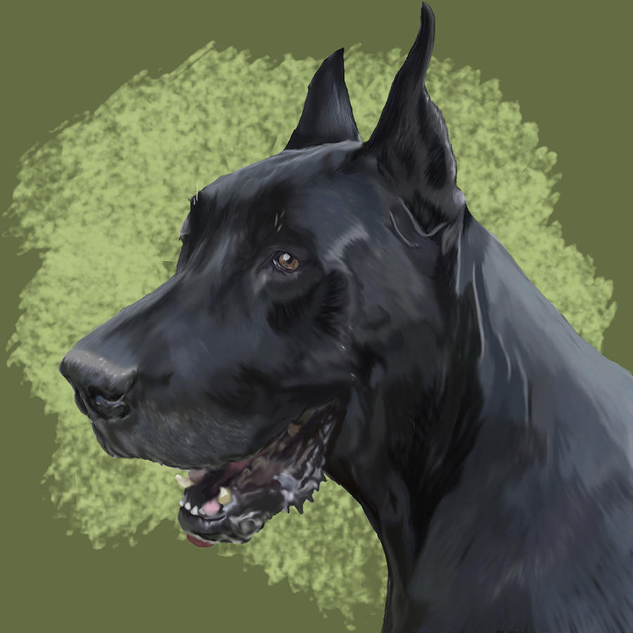 Zeus The Great Dane by Shandy Huff
