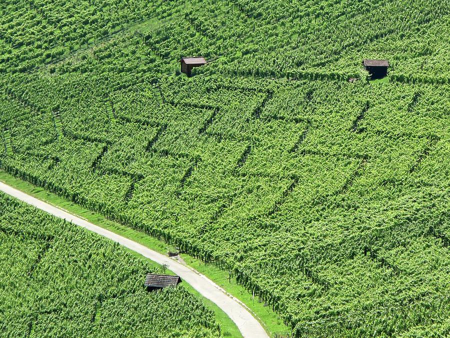 Horizontal Photograph - Zig-zag In Vineyards by Ursula Sander