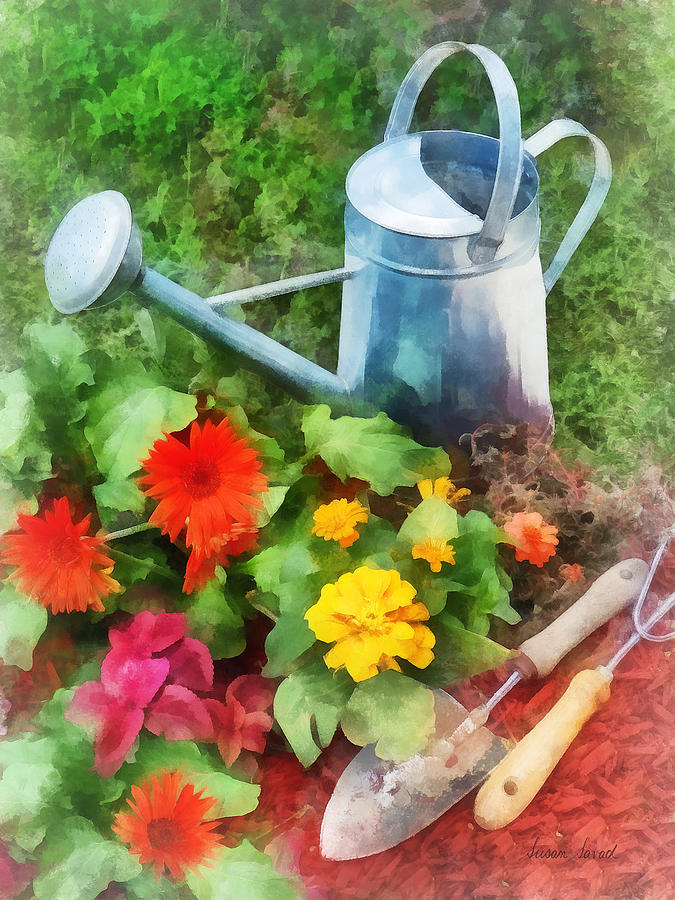 Zinnia Photograph - Zinnias And Watering Can by Susan Savad