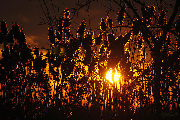 Michael Frank Jr - 05 Sunset