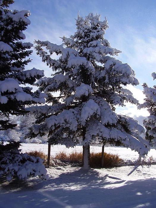 Yvette Pichette - First Snow