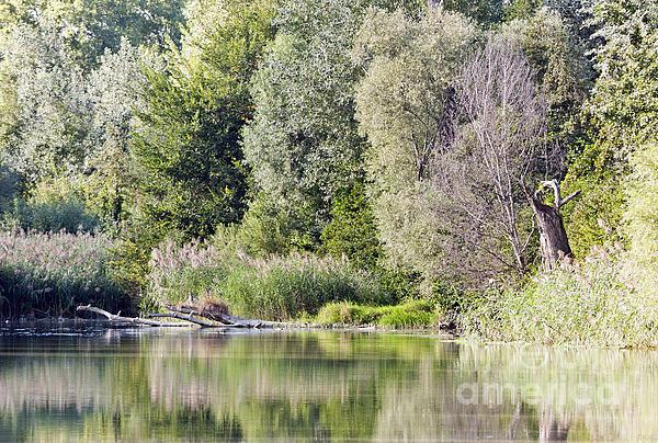 Odon Czintos - Lake reflections
