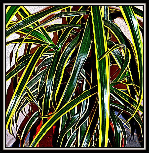 Anand Swaroop Manchiraju - Leaves