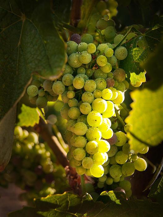 Kent Sorensen - A Good Year for Wine