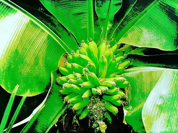 Mother Nature - A Hand for the Neon Bananas