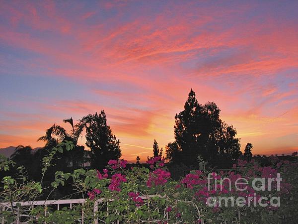 Phyllis Kaltenbach - Beautiful Desert Sunset