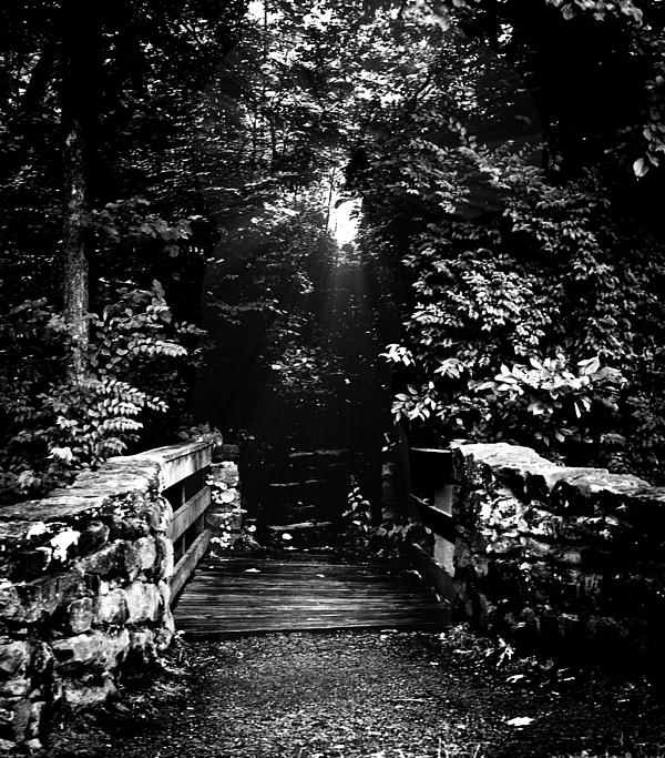 Steve Buckenberger - A Path of Shadow and Light