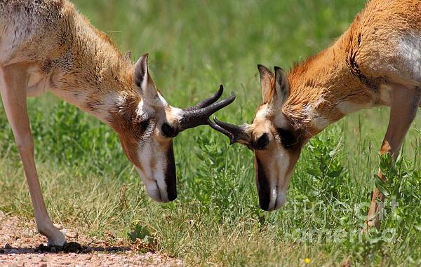 Robert Frederick - Antelope Play