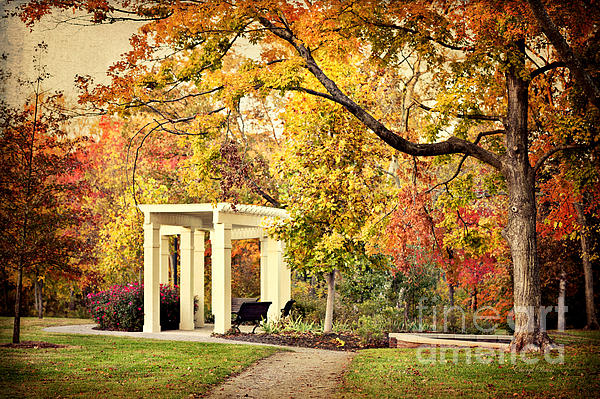 Cheryl Davis - Autumn Arbor