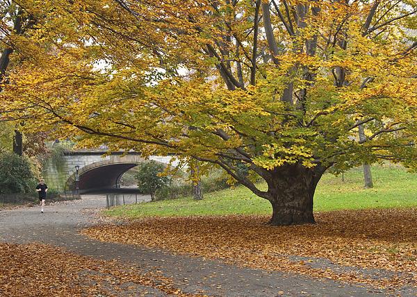 Ellen McKnight - Autumn in Central Park