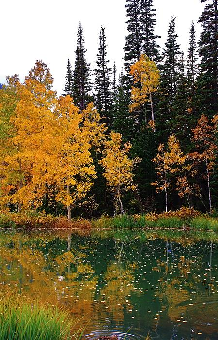 Bruce Bley - Autumn Reflections