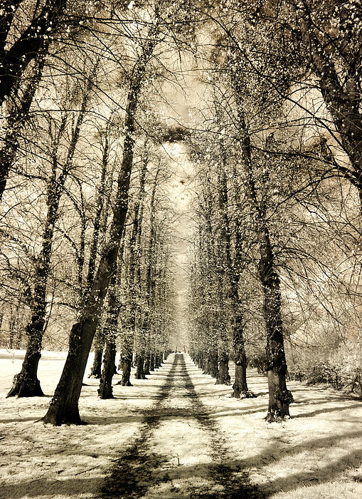 Andy Linden - Avenue Of Trees
