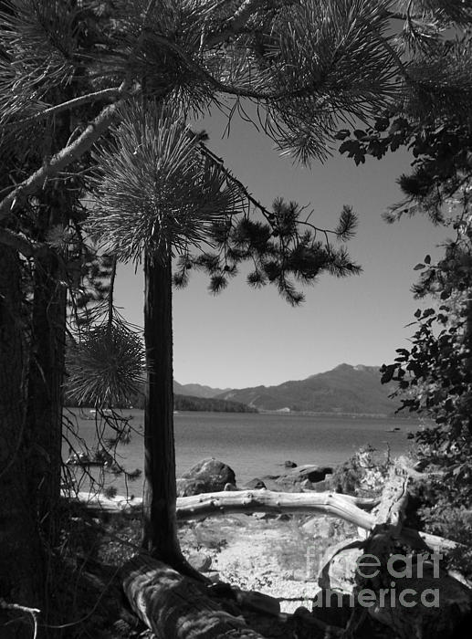 J J - Black and White Photography - Wenatchee National Forest