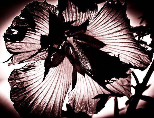 Steve Buckenberger - Black White   Shadow Light