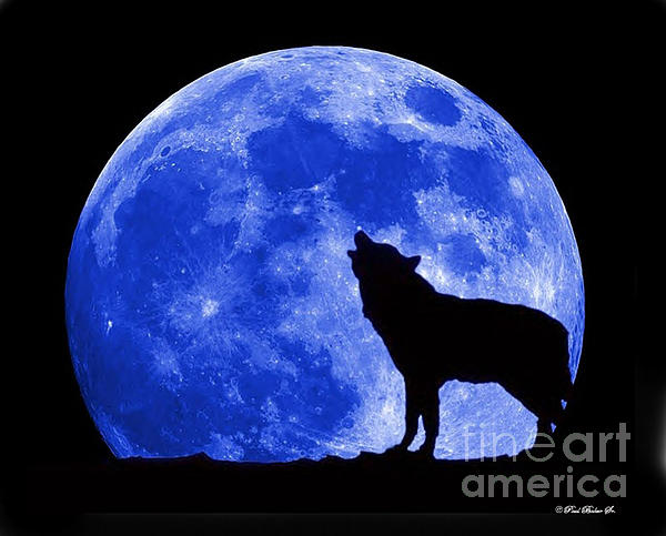 Paul Baker - Blue Moon Wolf