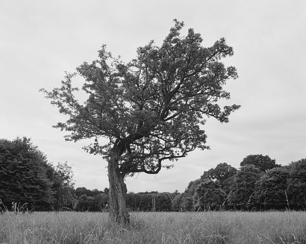 Marcio Faustino - Bowed tree