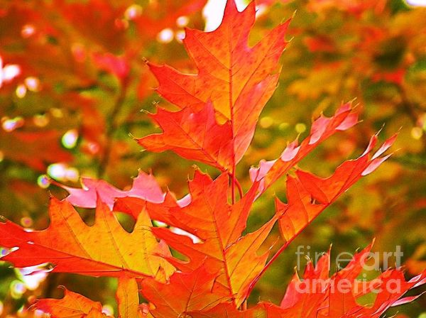 Donna Parlow - Brilliant Red Oak Leaves