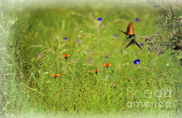 John  Kolenberg - Butterflies Making Love In The Meadow
