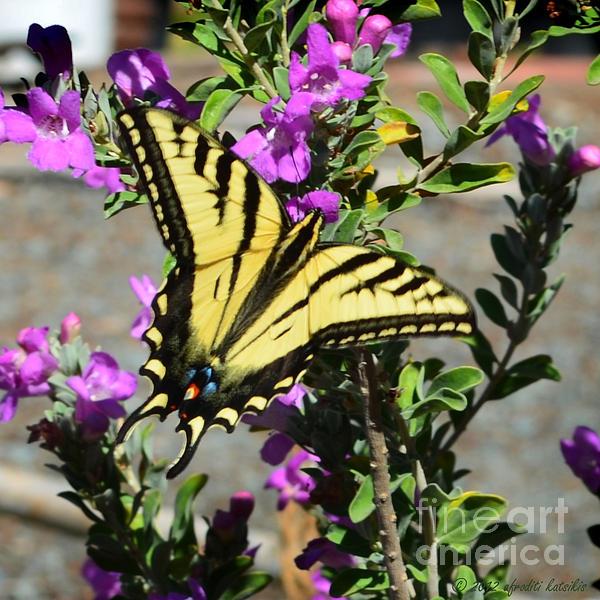 Afroditi Katsikis - Butterfly 2