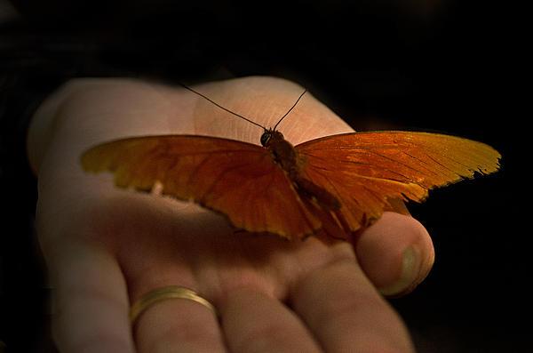 Cheryl Cencich - Butterfly in hand