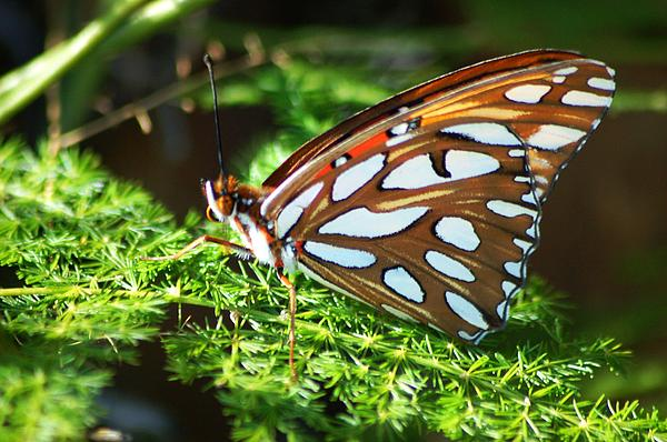 Meeli Sonn - Butterfly on green