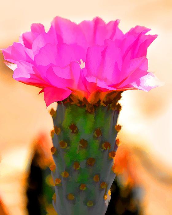 Diane Wood - Cactus Vase