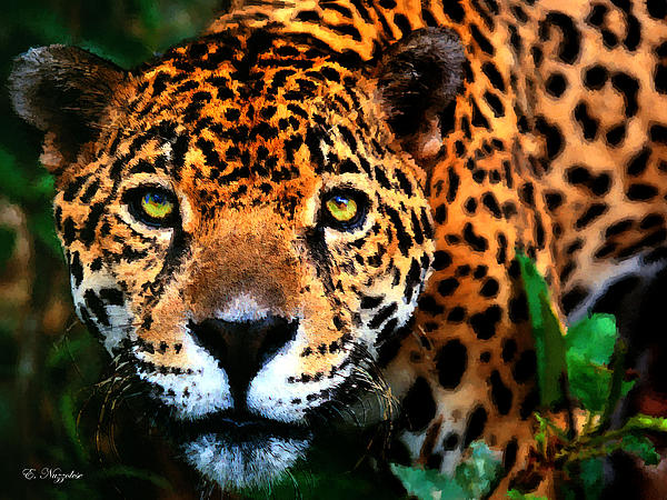 Elizabeth Nuzzolese - Cheetah From Brazil