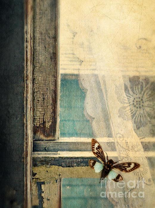 Jill Battaglia - Cicada on Window
