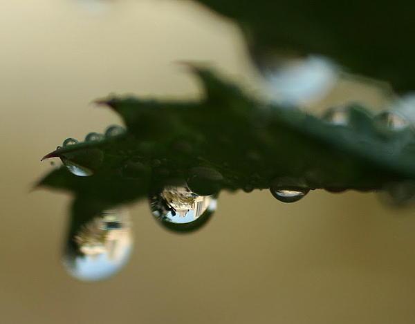 Tracy Welker - Cincinnati Dew Drop