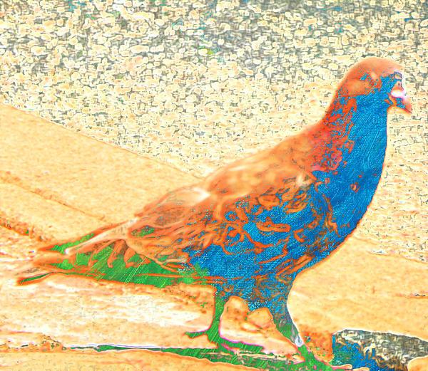 Lenore Senior - Citybird