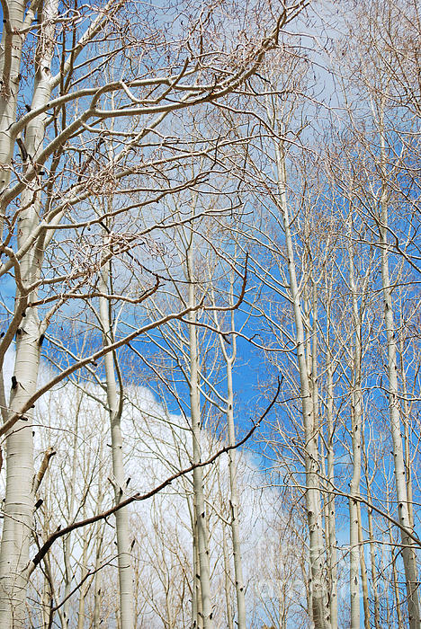 Donna Greene - Cloudy Aspen Sky