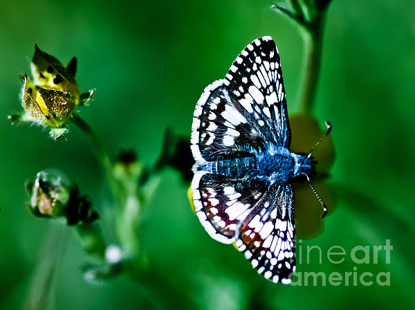 Mitch Shindelbower - Colorful Butterfly