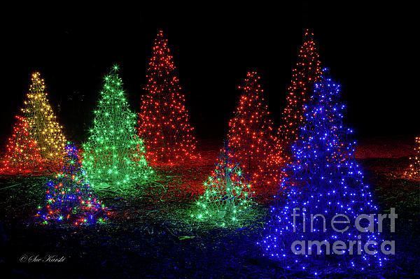 colorful christmas trees by sue karski boundary bleed area may not be visible - Colorful Christmas Trees