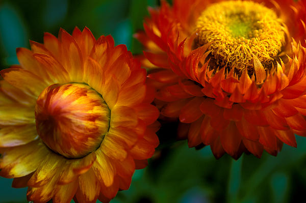 Kathy Yates - Colors of Fall